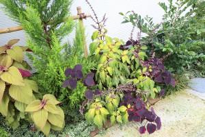 ishikawa植物oh03