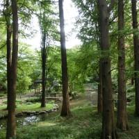 森の中、池や小川もあります。