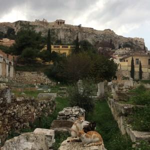 アクロポリスの丘と3匹の猫