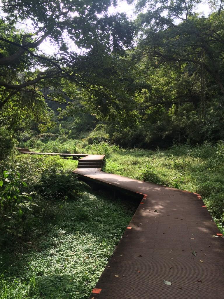 折れ曲がる散策路も自然との対比で美しく見えます。