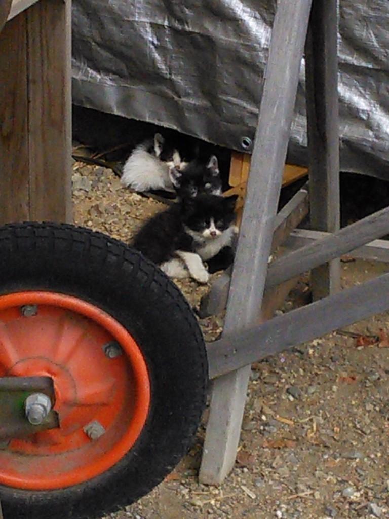 保護される直前の様子。仔猫は3匹いました。
