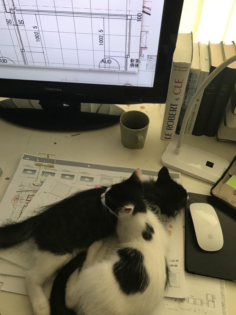 8月。休日に家で仕事をしようと思っても、誘惑されてつい遊んでしまいます。ネコの手を借りると仕事は捗りません。