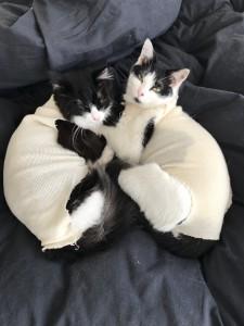 退院後2匹でおとなしくしていました。