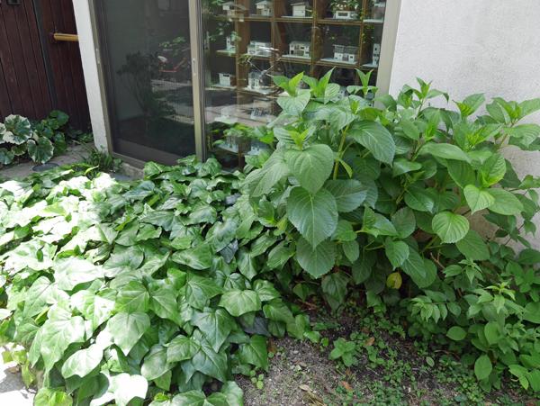 小さな前庭です。事務所に面しています。